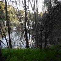 Riparian areas, Namoi River (NSW), 2010