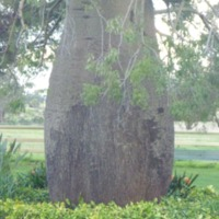 Tree species, [n.d].