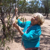 Photograph of Lorna McNiven with a Red River Gum tree, Eulo (QLD), 17 October 2010.