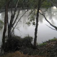 Darling River, near Pooncarie (NSW), November 2010