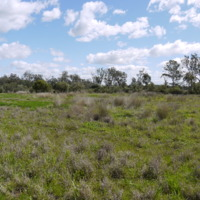 Riparian vegetation restoration progress made on the Jamaeson property, Namoi River (NSW), 2010