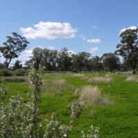 Vegetation on the Jamaeson property, 2010