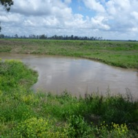 Denuded and eroding banks on the Condamine River (and revegetation in the background), 2010