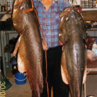 Two large Murray Cod, 30 August 2007.