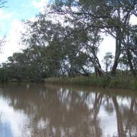 Bowenville Reserve, Queensland, 2010