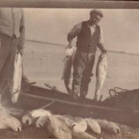 Mulloway, Coorong and Lower Lakes, circa 1930