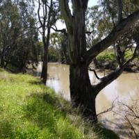 The Namoi River near the Hannan property, n.d.