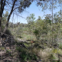 Plant species on the Grace property, Great Anabranch, 2010
