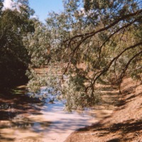 Culgoa River below Brenda Station (NSW), a dry period, [no date]