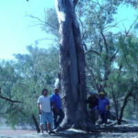 Four people pictured next to an Aboriginal scarred tree, [n.d]