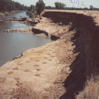 Riparian vegetation restoration on the Jamaeson property, Namoi River (NSW), March 1992
