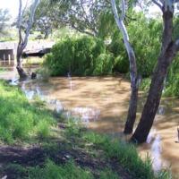 Upper Condamine, Queensland, 2010