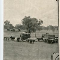 Crossing Warrego, below Charleville, Queensland, circa 1920s