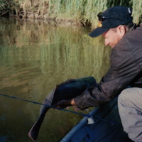 Jason Simpson with Murray Cod (catch and release), Namoi River (NSW), [no date]
