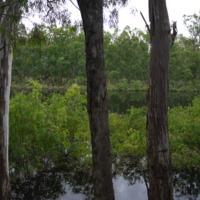 Dairy Lagoon (Chinamans Lagoon), New South Wales, 2010