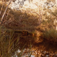 Tree species on the riverbanks, [n.d].
