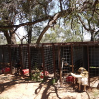 Dog kennels, Grace property, Great Anabranch, 2010