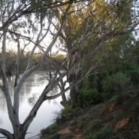 Riparian areas, Darling River, near Pooncarie (NSW), November 2010