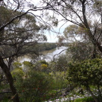 Riparian vegetation, Katarapko Creek, 2010