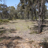 Riparian area near the Goulburn River (VIC), [n.d.]