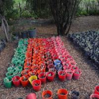 Potted plants used for riparian vegetation restoration on the Jamaeson property, 2010