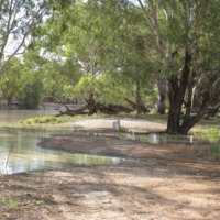 Floodwaters, Darling River, near Pooncarie (NSW), November 2010