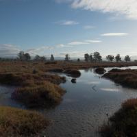 Salt marsh near Moruya, NSW (CC-BY-ND) by Dan Woodrow, on Flickr at https://farm8.staticflickr.com/7664/16732165724_f2af337fc4_s.jpg