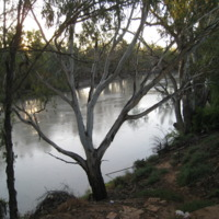 Darling River, near Pooncarie (NSW), November 2010