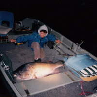 An 80 pound Murray Cod, 1200 millimetres long, caught by Angus Drummond, Barrie Hall and Jim Hanley in the Edward River at Longreach, Moulamein (NSW), 5 December 2003.