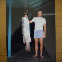 A man pictured with a large Murray Cod, n.d.