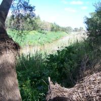 Oakey Creek, Queensland, 2010