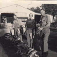 (L-R) Augi Comi, Fred Wheeler and Alf Comi with their catch from Robinvale (VIC), 1960s.